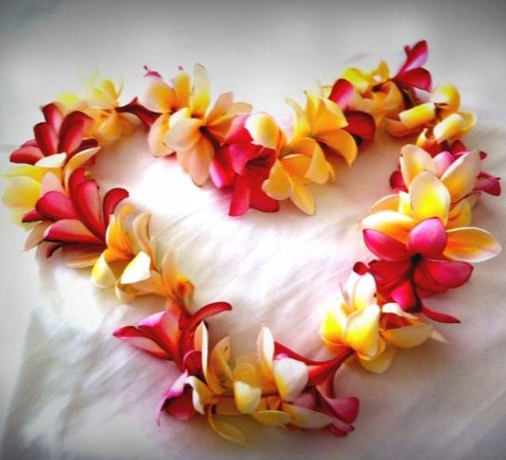 Plumeria Lei Heart via Pinterest