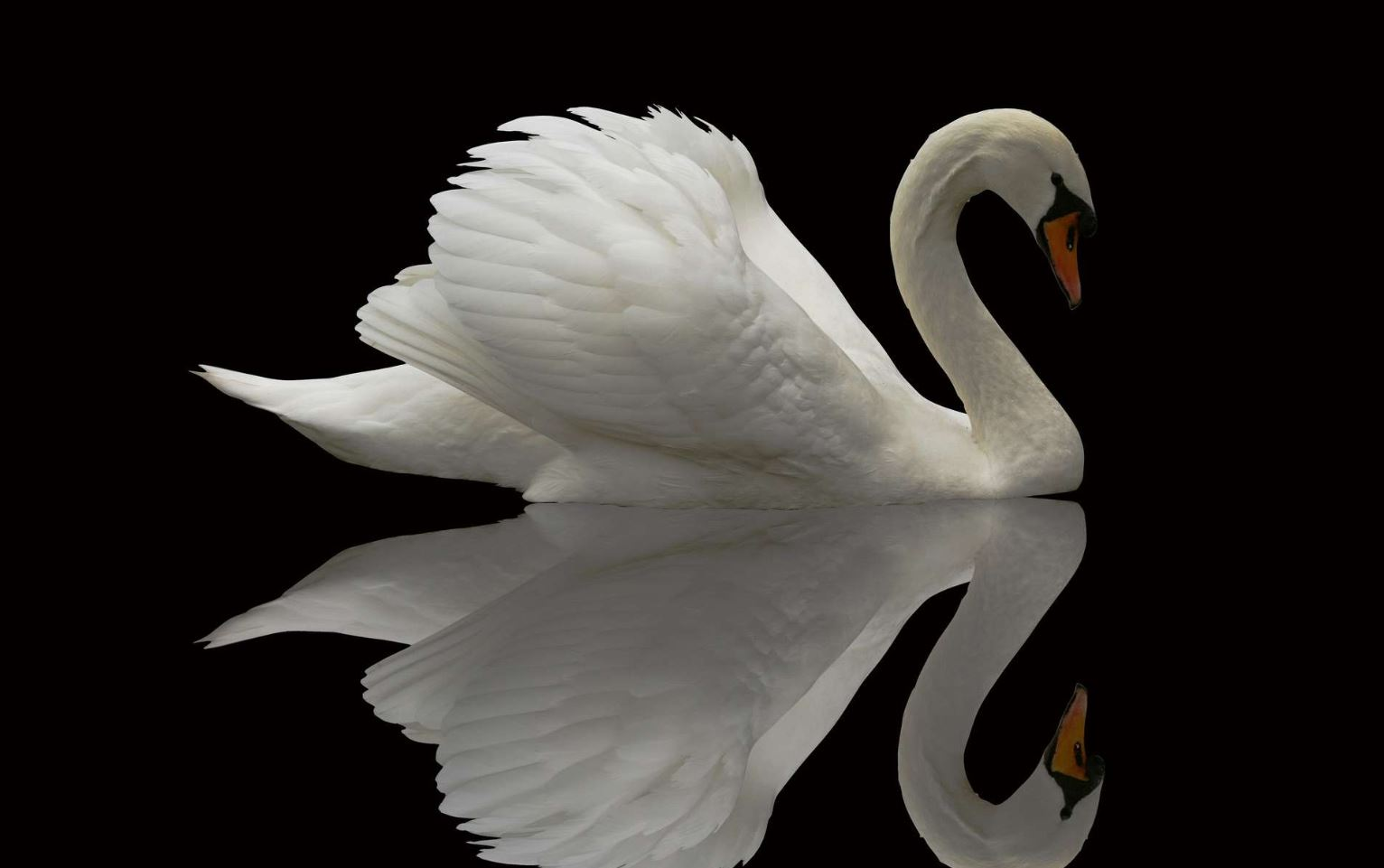 A swan should see herself as the beauty that she is. Photo via hdwallsource.com.